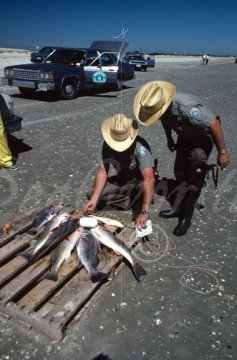 Texas Fish  Game on Texas Game Wardens Measure Fish  Texas Warden 12    Stock Photography