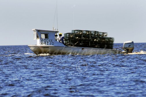 Commercial crab fishing boats the image for Commercial fishing florida