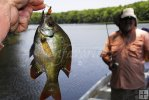 Angler and bluegill