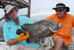 Side view of tripletail