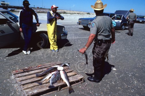 texas game warden measures fish texas warden 11 stock