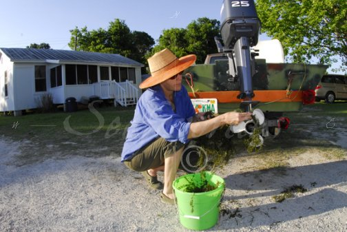 Cleaning hydrilla from equipment