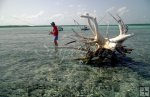 Belize angler and dead tree