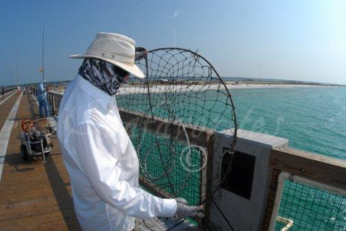 Pier landing net pier 62 stock photography by for Pier fishing net