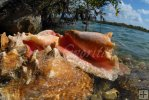 Pile of conch shells
