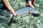Bonefish ready to release