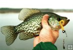 Crappie and Beetle spin