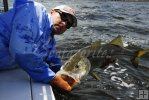 Big snook, Capt. Mark Cowart