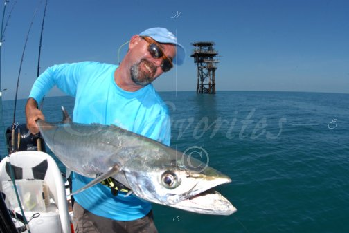 Kingfish and oil rig