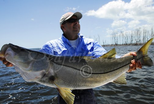 Big snook in the Everglades
