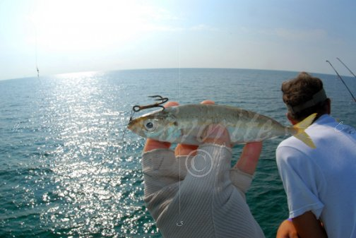Bait and angler pier 60 stock photography by for Best bait for pier fishing